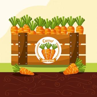 Verdura di carota sempre fresca nel cestino di legno