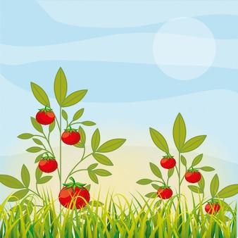 Verdura di piantagione di agricoltura