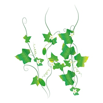 Verdura ed erbe