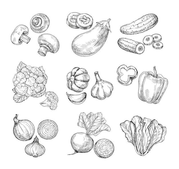 Verdure disegnate a mano cavolfiore da giardino, pepe e melanzane, funghi prataioli.