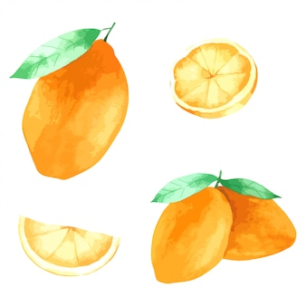 Vernice a mano al limone nella raccolta dell'acquerello
