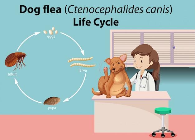 Veterinario con animale malato