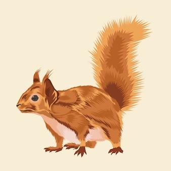 Vettore animale dello scoiattolo