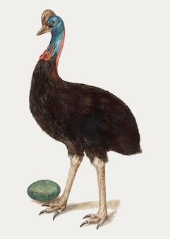 Vettore d'annata dell'illustrazione dell'uccello del cassowary