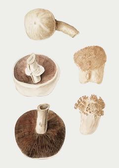 Vettore d'annata dell'illustrazione di varietà del fungo