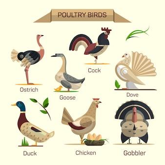 Vettore degli uccelli dell'azienda agricola fissato nel disegno piano di stile. raccolta di animali domestici di pollame. oca, gallina, anatra, gobbler, colomba.