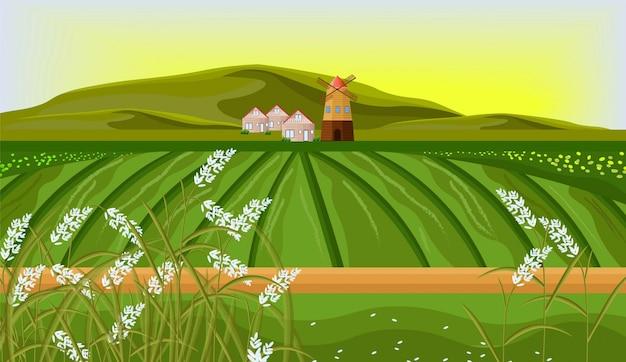 Vettore del paesaggio dell'azienda agricola delle risaie. illustrazioni di sfondo sole