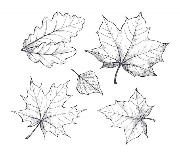 Vettore del profilo di schizzo di autumn season leaves di caduta