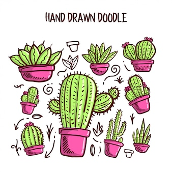 Vettore del set di cactus e succulente.