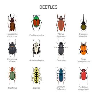 Vettore di bug impostato nel design stile piano. diversi tipi di coleotteri collezione di specie di insetti. isolato