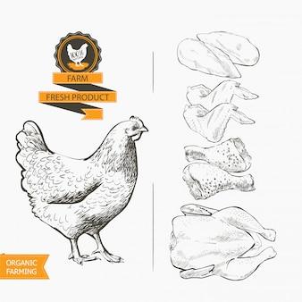 Vettore di carne di pollo