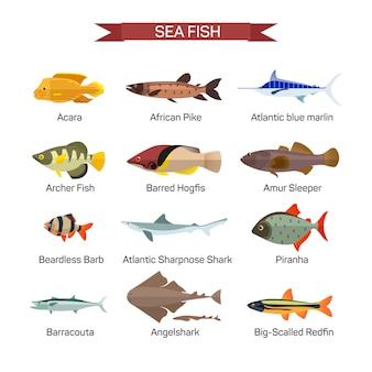 Vettore di pesce impostato nel design stile piano. raccolta di pesci oceanici, marini e fluviali. isolato