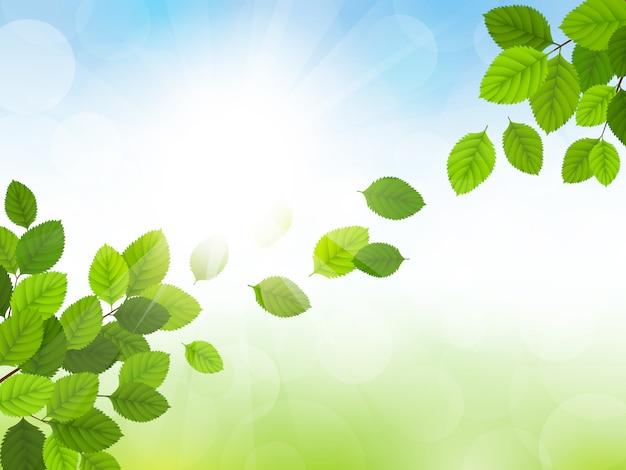 Vettore di primavera con foglie