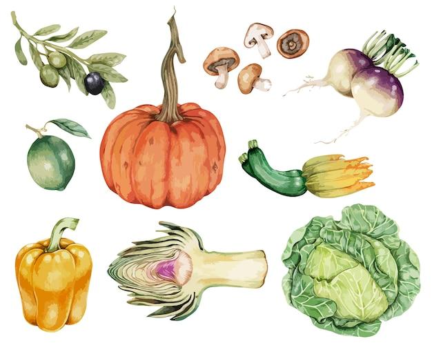 Vettore di raccolta vegetale disegnata a mano