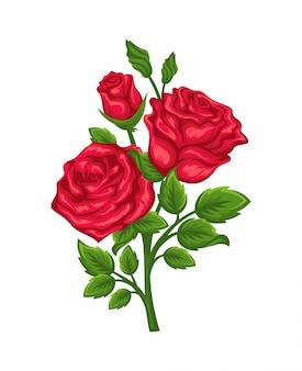Vettore di rami di rose rosse isolato su uno sfondo bianco.