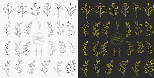Vettore disegnato a mano degli elementi floreali