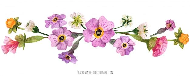 Vignetta dalle piante selvatiche della scozia