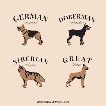 Vintage selection di quattro cani di razza