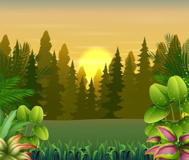 Vista delle piante e degli alberi all'illustrazione di tramonto