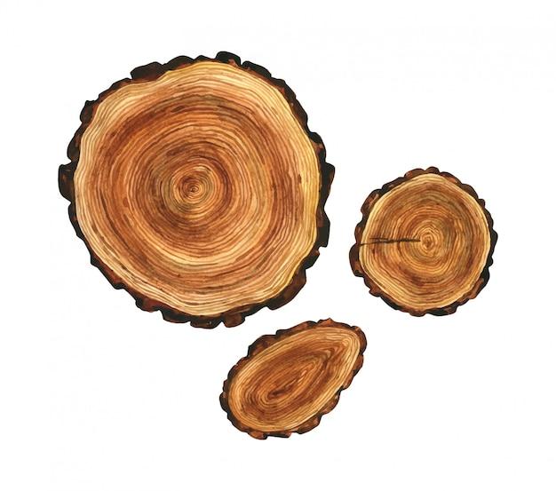 Visto il legno tagliato. illustrazione dell'acquerello del cuore di un albero.
