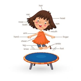 Vocabolario parte del vettore del corpo