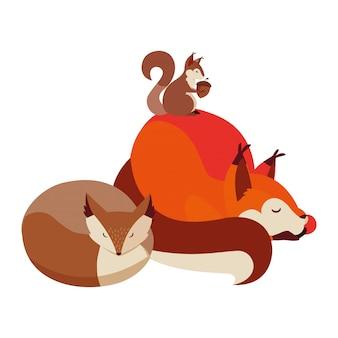 Volpi e animali scoiattolo sulla natura