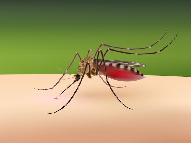 Zanzara che succhia sangue