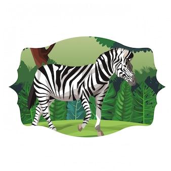 Zebra animale selvatico