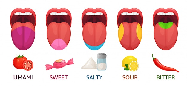 Zone di gusto della lingua. gusti dolci, amari e salati. illustrazione di vettore del fumetto del diagramma dei recettori di sapore acido e di umami