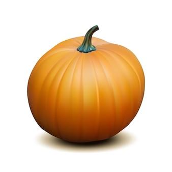 Zucca realistica arancione su sfondo bianco, simbolo del ringraziamento del raccolto. illustrazione