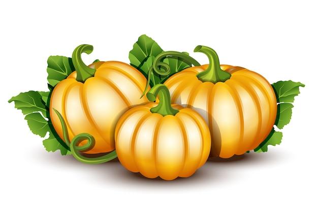 Zucche con foglie su sfondo bianco. illustrazione arancione maturo zucca - zucca per halloween, festival del raccolto autunnale o il giorno del ringraziamento. verdure ecocompatibili.