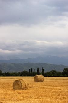 2 hooibergrollen op een landbouwveld in de uitlopers van centraal-azië met kopieerruimte