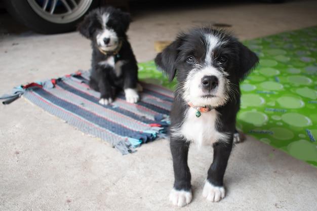2 schattige zwarte puppy's poseren voor foto's.