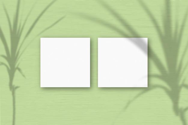 2 vierkante vellen wit getextureerd papier op lichtgroene muurachtergrond. mockup-overlay met de plantschaduwen. natuurlijk licht werpt schaduwen van een tropische plant. plat lag, bovenaanzicht. horizontaal