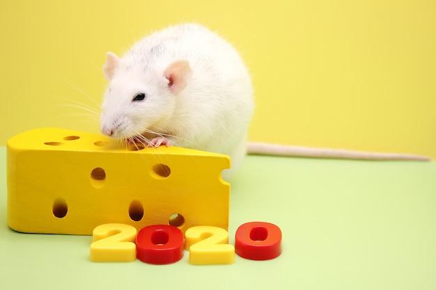 2020 nieuwjaarsnummer en de decoratieve rat met speelgoedkaas. de rat is een symbool van het nieuwe jaar 2020.