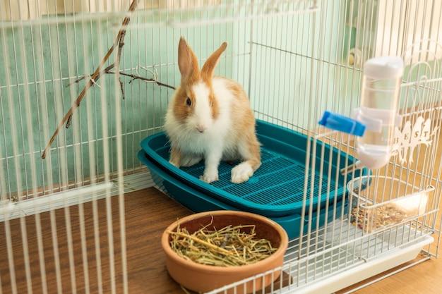 3 maanden oud konijntje heet welkom in zijn kooi