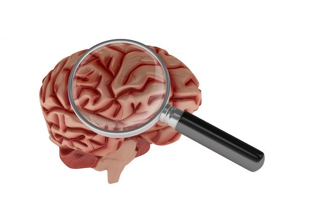 3d cartoon menselijk brein met loep