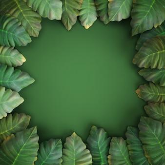 3d geef, tropische bladeren, alocasia, groene achtergrond terug