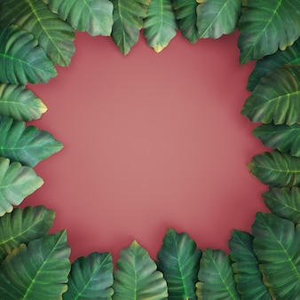 3d geef, tropische bladeren, alocasia, roze achtergrond terug