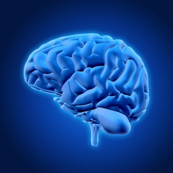 3d hersenen