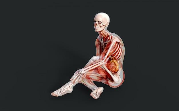 3d illustratie van een mannelijk skeletspiersysteem, been en een spijsverteringssysteem met het knippen van weg