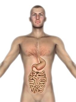3d mannelijk cijfer met blootgestelde interne organen