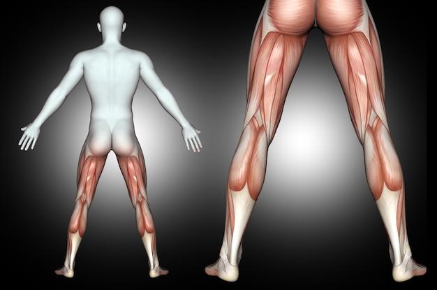 3d mannelijk medisch cijfer met benadrukte rug van beenspieren