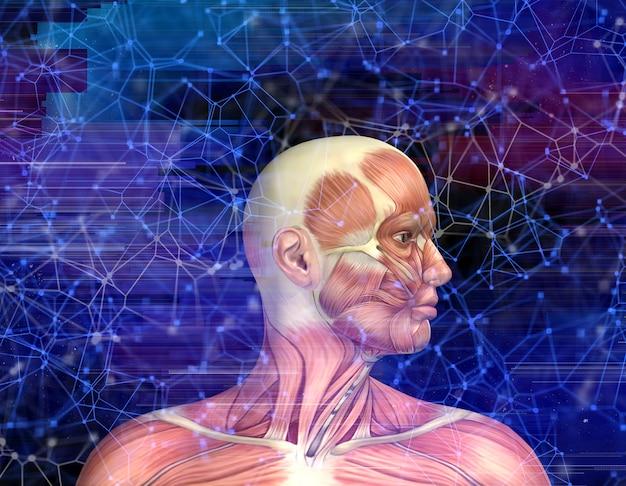 3d mannelijk medisch cijfer met spierkaart op de achtergrond van de technostijl