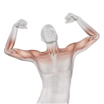 3d mannelijke medische figuur met gedeeltelijke spierkaart
