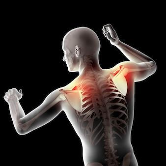 3d mannelijke medische figuur met schouderbladen gemarkeerd