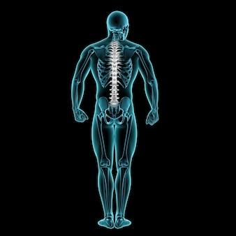 3d mannelijke medische figuur met wervelkolom gemarkeerd