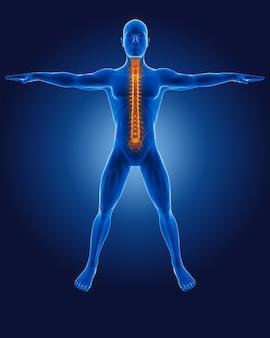 3d medische man met skelet wervelkolom gemarkeerd