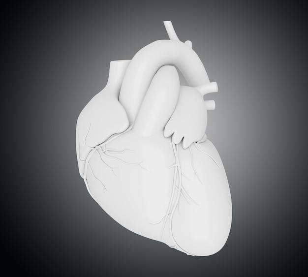 3d menselijk hart