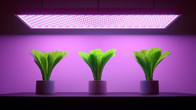 3d render drie groene planten in potten onder paars led-licht